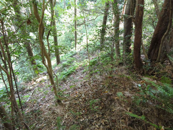 IMG_2635植林頂部へ出る.JPG