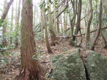 IMG_3118植林境.JPG
