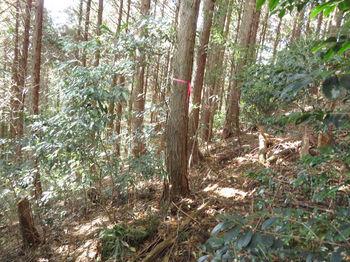 IMG_3141植林斜面をトラバース.JPG