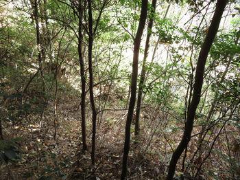 IMG_3144雑木ヤブの小谷を下る.JPG
