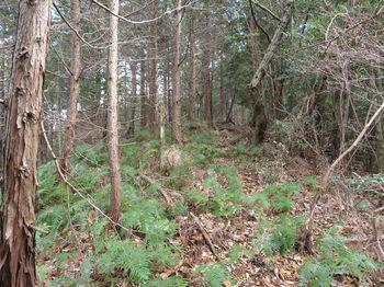 IMG_3153植林境.JPG