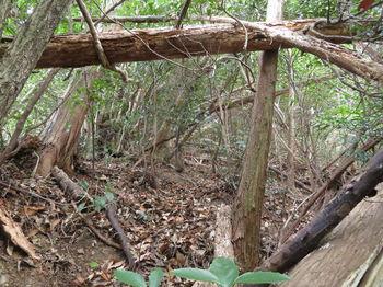 IMG_3161右の植林帯・倒木.JPG