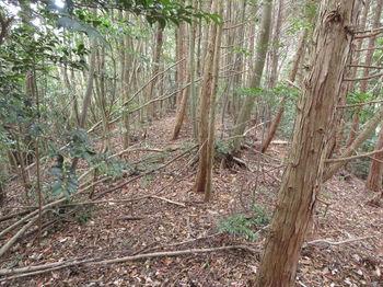 IMG_3171植林境.JPG