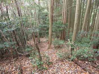 IMG_3175植林境・下り.JPG
