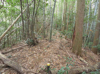 IMG_3180タケ交じり植林境・平坦尾根.JPG