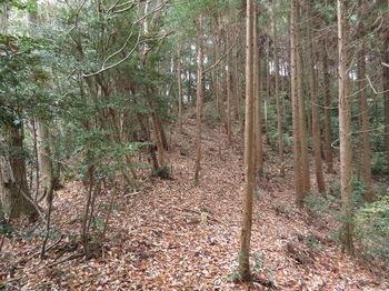 IMG_3205植林境・上り.JPG