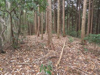 IMG_3211植林境.JPG