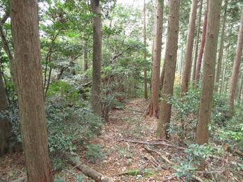 IMG_3223植林境尾根・下り.JPG