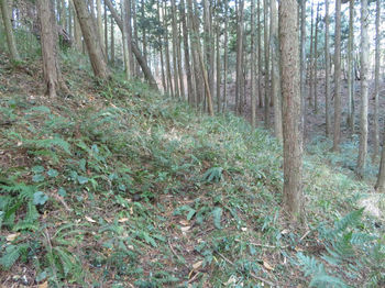 IMG_3601山道.JPG