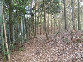 IMG_3602幅広山道.JPG