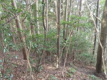IMG_3618植林境.JPG
