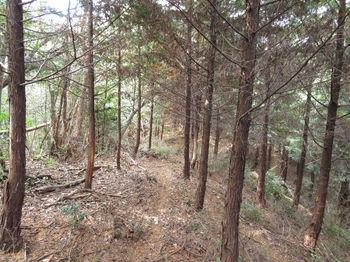 IMG_3626植林境.JPG