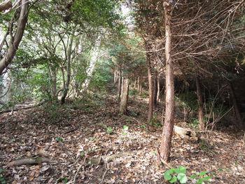 IMG_3630植林境・上り.JPG