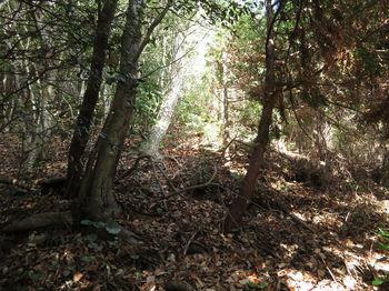 IMG_3632植林境.JPG