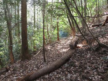 IMG_3671植林沿い.JPG
