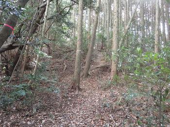 IMG_3683植林沿い.JPG