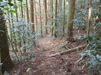 IMG_3749植林沿い・巻き道.JPG