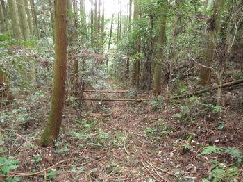 IMG_3753植林沿い.JPG
