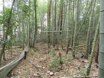 IMG_3754竹林沿い.JPG
