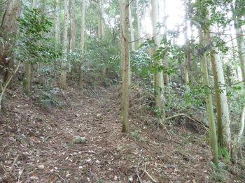 IMG_4148植林沿い.JPG