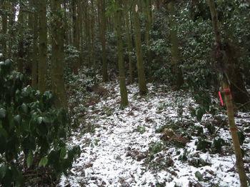 IMG_4311山道.JPG