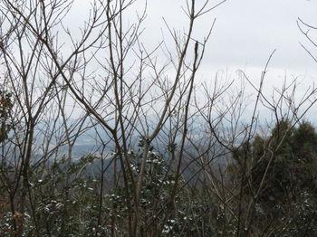 IMG_4338樹間展望.JPG