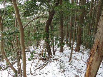 IMG_4353ヒノキ植林境.JPG