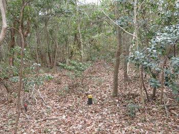 IMG_4390雑木疎林の平坦尾根.JPG