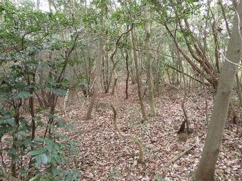 IMG_4392雑木疎林.JPG