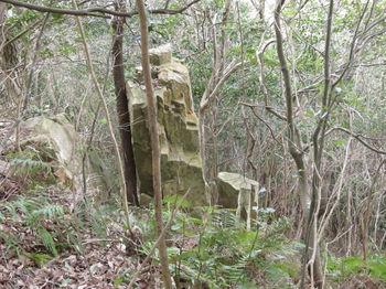 IMG_4404直立の岩.JPG