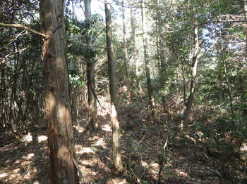 IMG_4540植林境.JPG