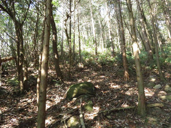 IMG_4542植林境.JPG