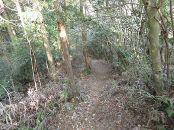 IMG_4581植林境.JPG