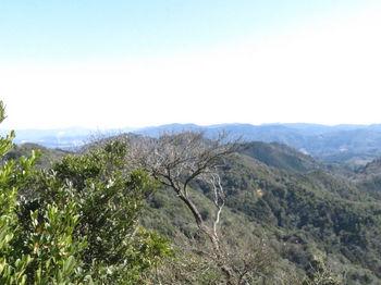 IMG_4672桜山.JPG