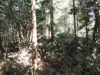 IMG_4706植林境.JPG