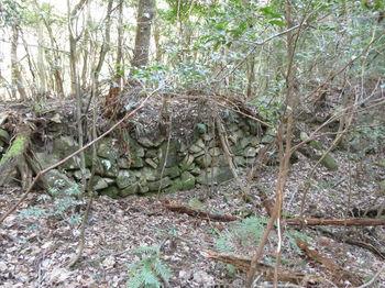 IMG_4773左の石垣.JPG