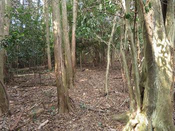 IMG_4830植林境.JPG