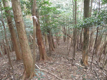 IMG_4836植林境.JPG