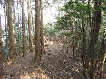 IMG_4837植林境(直登ルート合流点).JPG