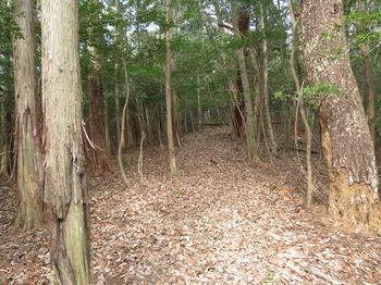 IMG_4850植林沿い平坦尾根.JPG