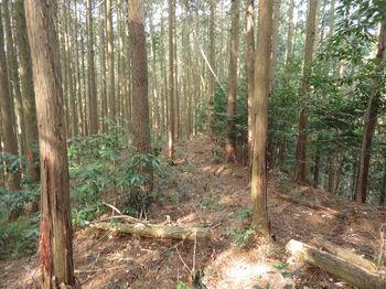 IMG_4853植林平坦尾根.JPG