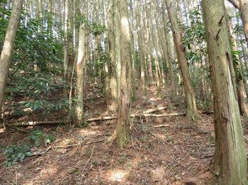 IMG_4855植林尾根・上り.JPG