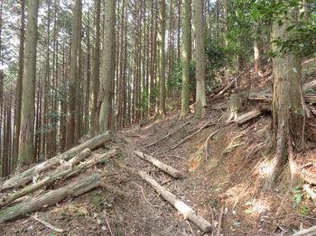 IMG_4870作業道跡(左方向).JPG