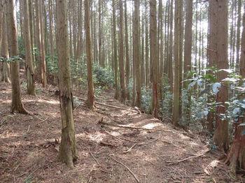 IMG_4876作業道跡(左方向).JPG