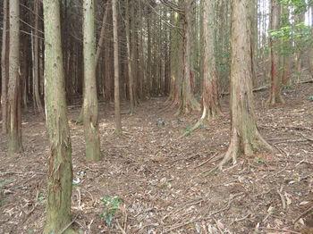 IMG_4883植林沿い.JPG