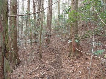 IMG_4884植林沿い.JPG