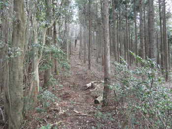 IMG_4914植林境.JPG