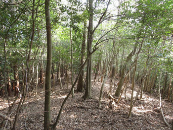 IMG_4935左にヒノキ植林.JPG