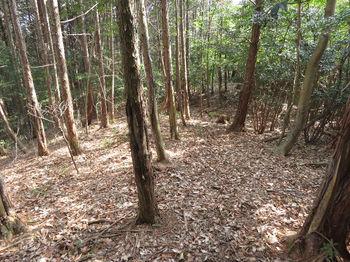 IMG_4940左植林境.JPG