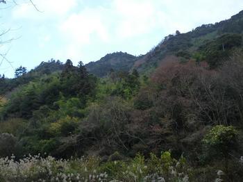 P04林道から山頂部がのぞく.JPG